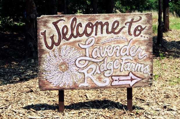ChickandBee-LavenderFestivalSign
